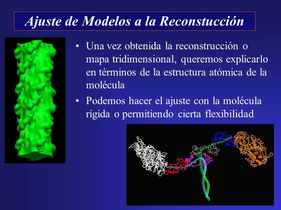 Una vez obtenida la reconstrucción o mapa tridimensional, queremos explicarlo en términos de la estructura atómica de la molécula Podemos hacer el aju