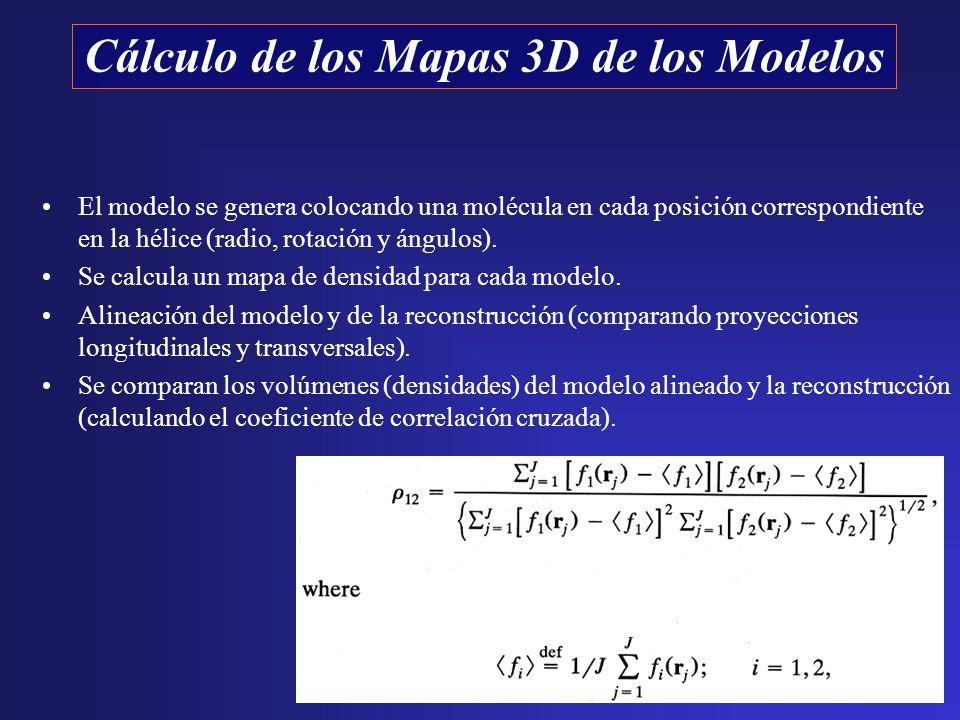 El modelo se genera colocando una molécula en cada posición correspondiente en la hélice (radio, rotación y ángulos). Se calcula un mapa de densidad p