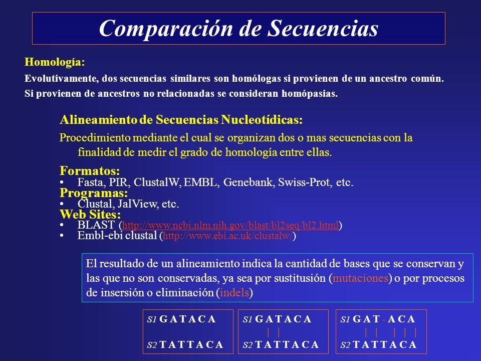 Comparación de Secuencias Alineamiento de Secuencias Nucleotídicas: Procedimiento mediante el cual se organizan dos o mas secuencias con la finalidad