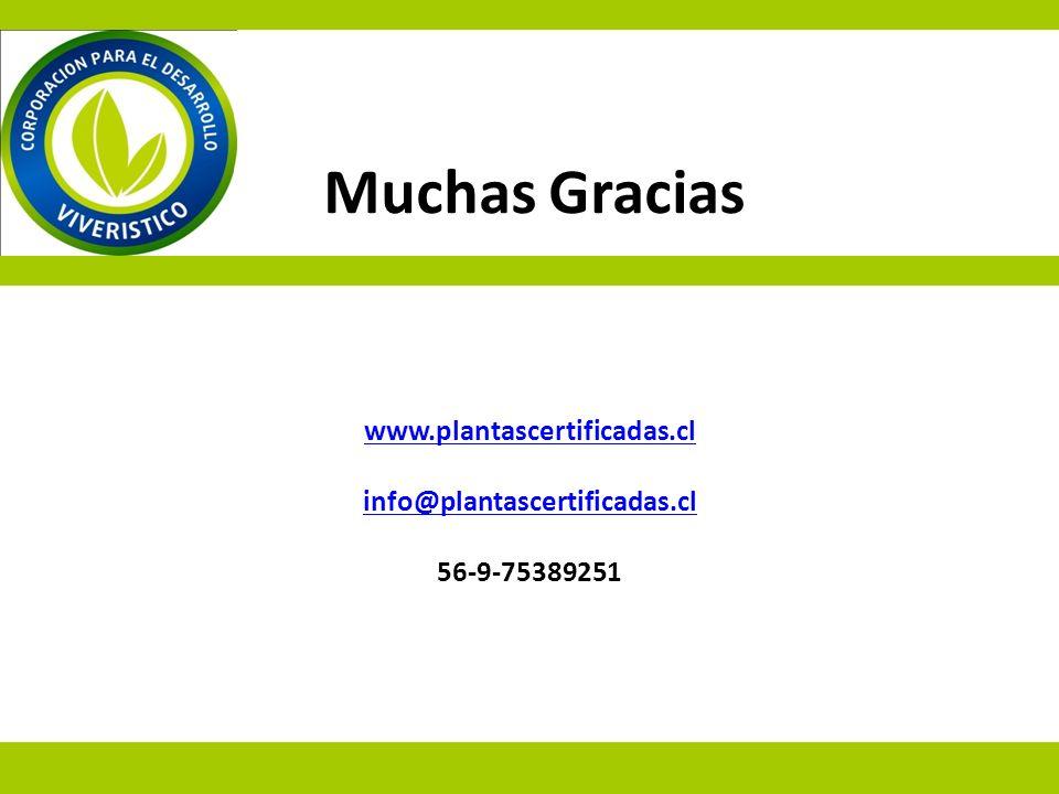 www.plantascertificadas.cl info@plantascertificadas.cl www.plantascertificadas.cl info@plantascertificadas.cl 56-9-75389251 Muchas Gracias