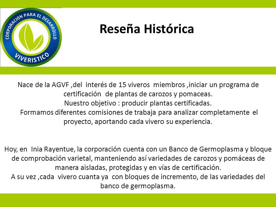 Nace de la AGVF,del interés de 15 viveros miembros,iniciar un programa de certificación de plantas de carozos y pomaceas. Nuestro objetivo : producir