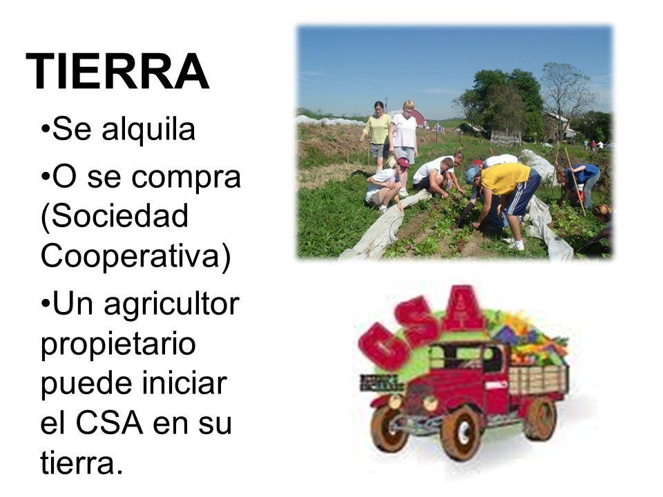 TIERRA Se alquila O se compra (Sociedad Cooperativa) Un agricultor propietario puede iniciar el CSA en su tierra.