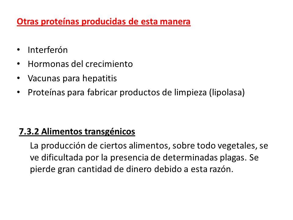 Otras proteínas producidas de esta manera Interferón Hormonas del crecimiento Vacunas para hepatitis Proteínas para fabricar productos de limpieza (li