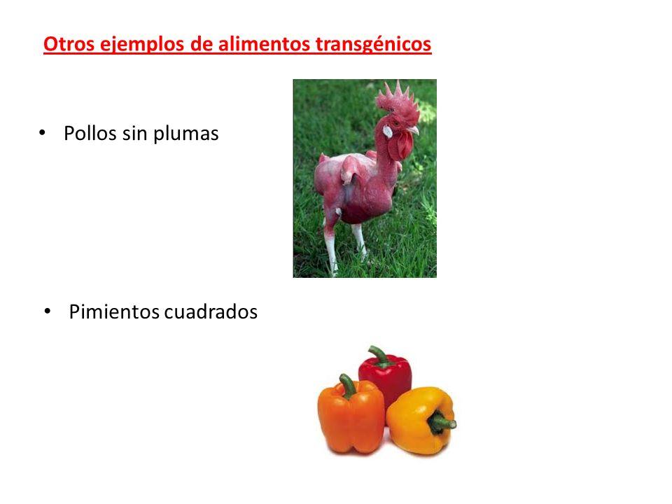 Otros ejemplos de alimentos transgénicos Pollos sin plumas Pimientos cuadrados