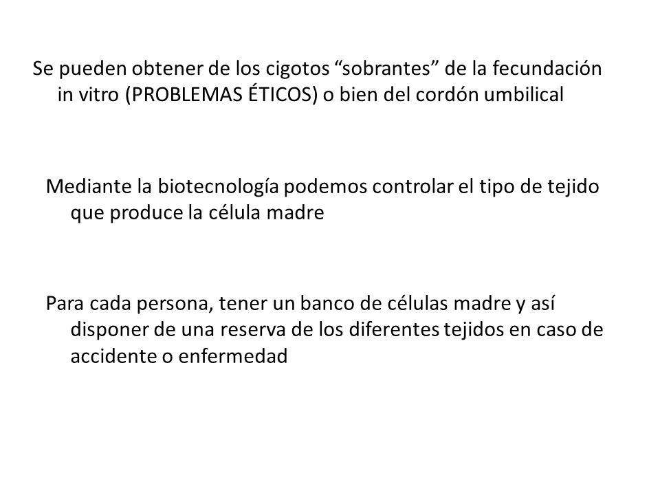 Se pueden obtener de los cigotos sobrantes de la fecundación in vitro (PROBLEMAS ÉTICOS) o bien del cordón umbilical Mediante la biotecnología podemos