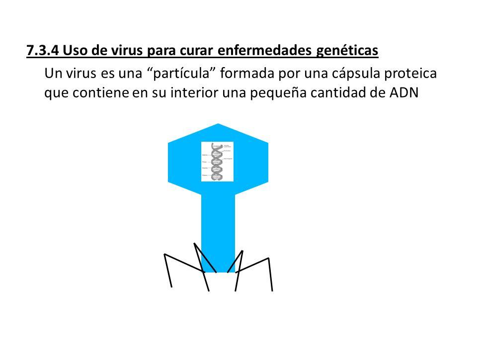 7.3.4 Uso de virus para curar enfermedades genéticas Un virus es una partícula formada por una cápsula proteica que contiene en su interior una pequeñ