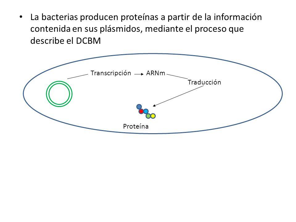 La bacterias producen proteínas a partir de la información contenida en sus plásmidos, mediante el proceso que describe el DCBM TranscripciónARNm Trad
