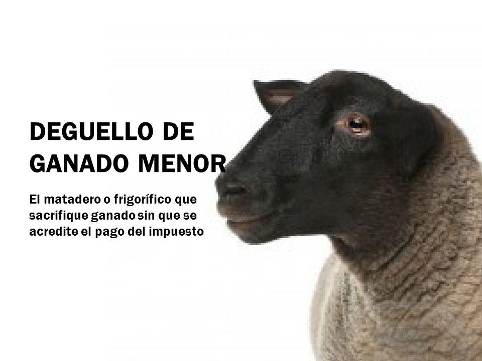 DEGUELLO DE GANADO MENOR El matadero o frigorífico que sacrifique ganado sin que se acredite el pago del impuesto