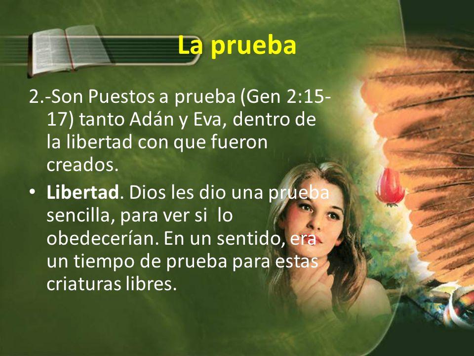 La prueba 2.-Son Puestos a prueba (Gen 2:15- 17) tanto Adán y Eva, dentro de la libertad con que fueron creados.