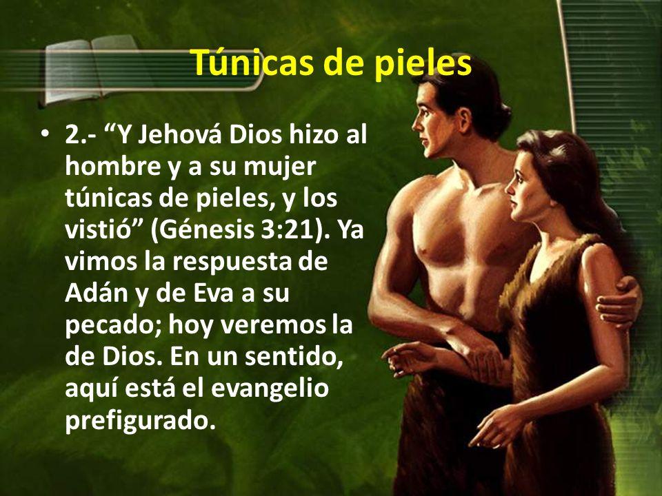 Túnicas de pieles 2.- Y Jehová Dios hizo al hombre y a su mujer túnicas de pieles, y los vistió (Génesis 3:21).