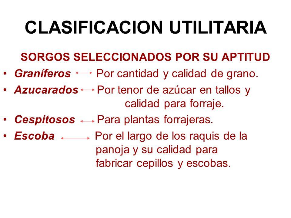 CLASIFICACION UTILITARIA SORGOS SELECCIONADOS POR SU APTITUD Graníferos Por cantidad y calidad de grano. Azucarados Por tenor de azúcar en tallos y ca