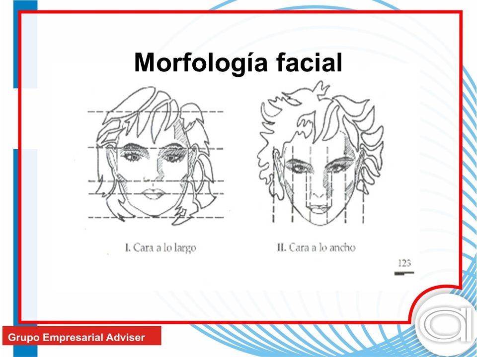 Morfología facial