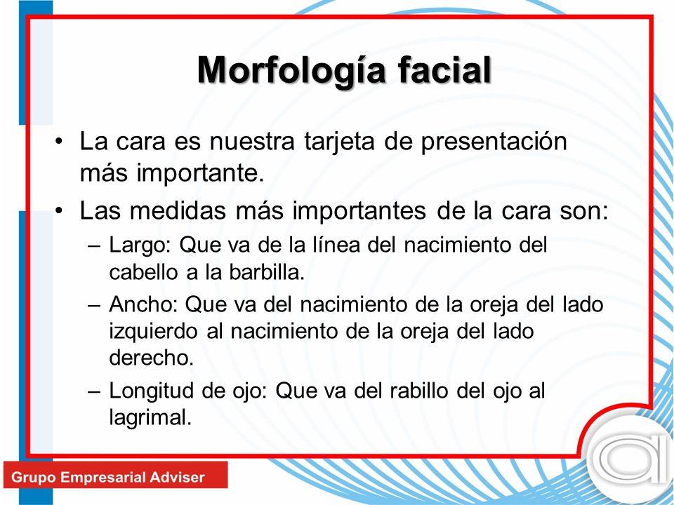 La cara es nuestra tarjeta de presentación más importante. Las medidas más importantes de la cara son: –Largo: Que va de la línea del nacimiento del c