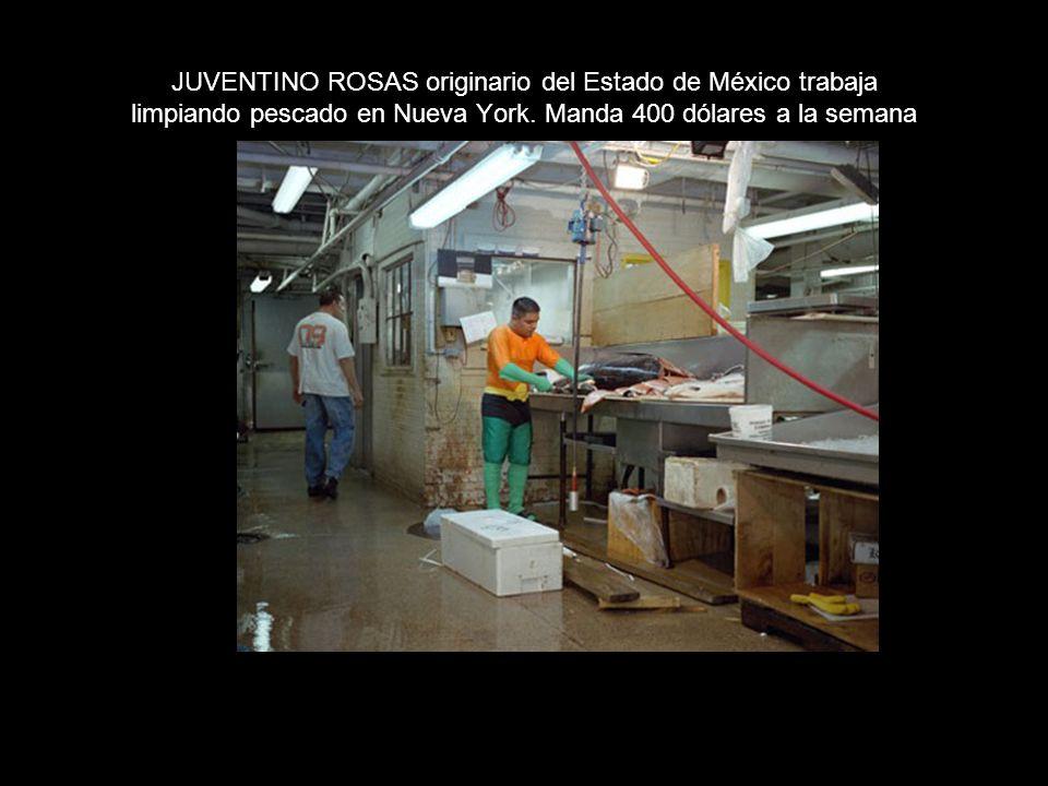 JUVENTINO ROSAS originario del Estado de México trabaja limpiando pescado en Nueva York.