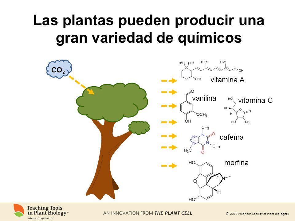 © 2013 American Society of Plant Biologists Las plantas pueden producir una gran variedad de químicos vitamina A vitamina C vanilina cafeína morfina C
