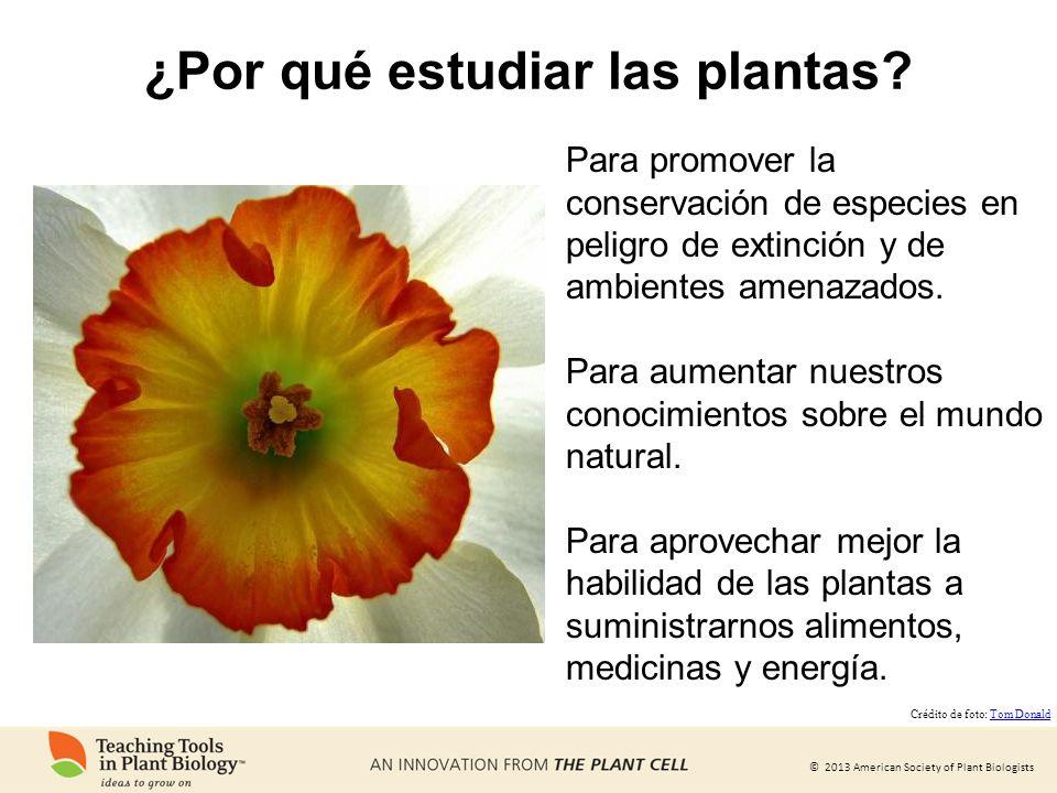 © 2013 American Society of Plant Biologists ¿Por qué estudiar las plantas? Para promover la conservación de especies en peligro de extinción y de ambi