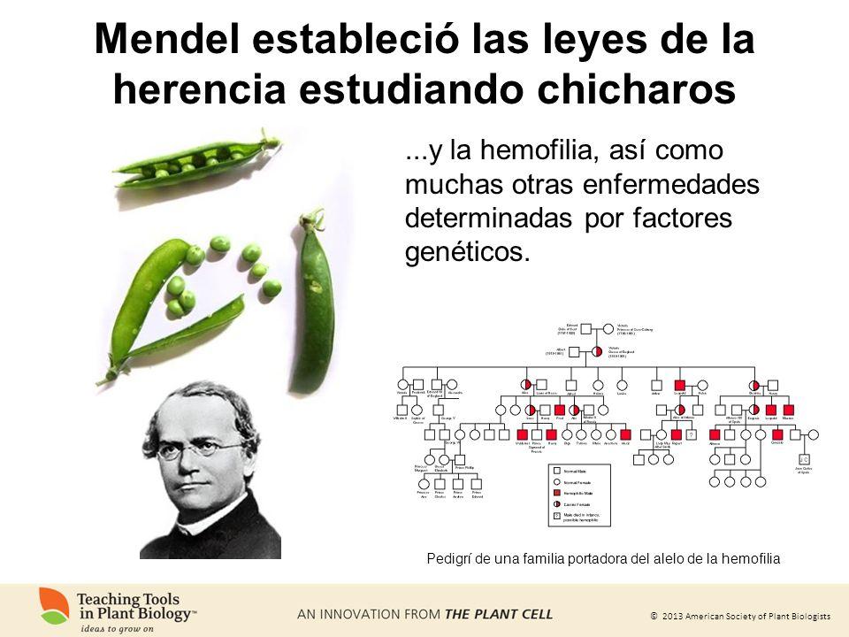© 2013 American Society of Plant Biologists...y la hemofilia, así como muchas otras enfermedades determinadas por factores genéticos. Pedigrí de una f