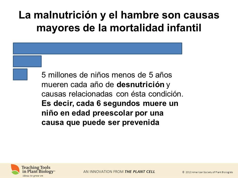 © 2013 American Society of Plant Biologists 5 millones de niños menos de 5 años mueren cada año de desnutrición y causas relacionadas con ésta condici