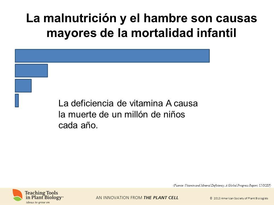 © 2013 American Society of Plant Biologists La deficiencia de vitamina A causa la muerte de un millón de niños cada año. (Fuente: Vitamin and Mineral