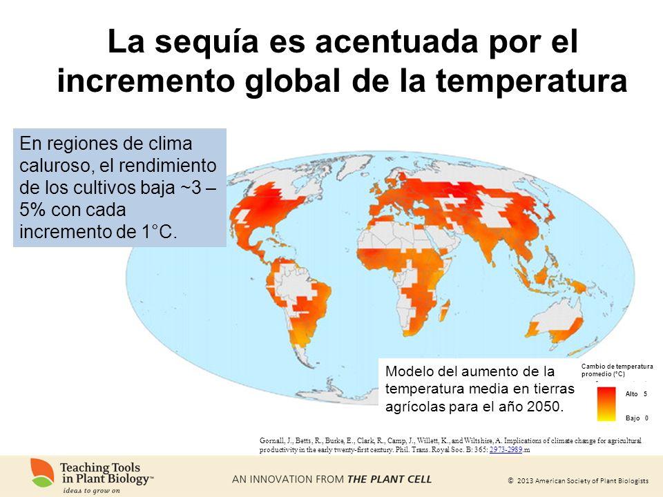© 2013 American Society of Plant Biologists La sequía es acentuada por el incremento global de la temperatura Gornall, J., Betts, R., Burke, E., Clark