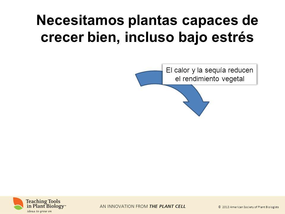© 2013 American Society of Plant Biologists El calor y la sequía reducen el rendimiento vegetal Necesitamos plantas capaces de crecer bien, incluso ba
