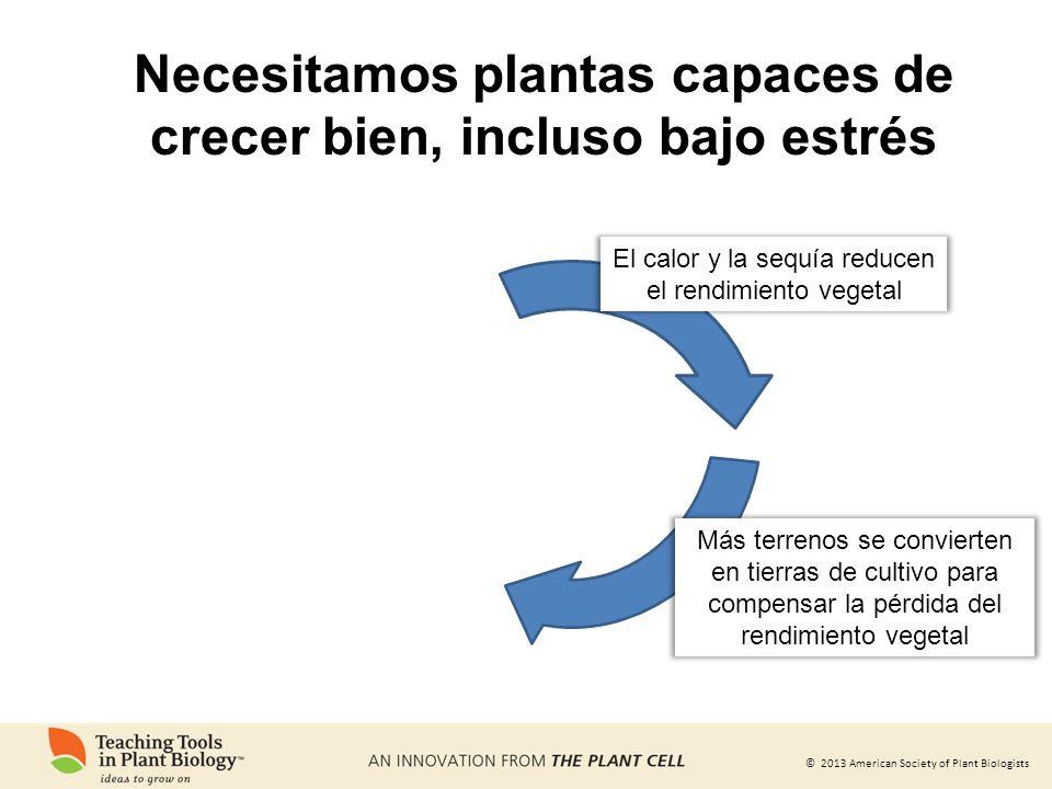 © 2013 American Society of Plant Biologists Más terrenos se convierten en tierras de cultivo para compensar la pérdida del rendimiento vegetal El calo