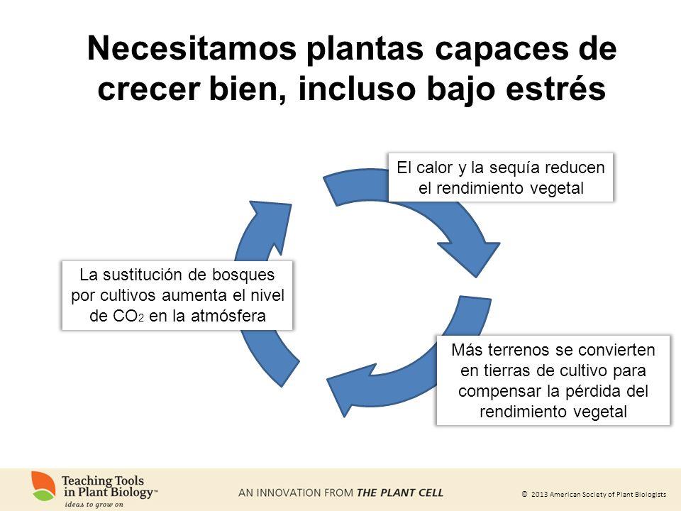 © 2013 American Society of Plant Biologists La sustitución de bosques por cultivos aumenta el nivel de CO 2 en la atmósfera Más terrenos se convierten
