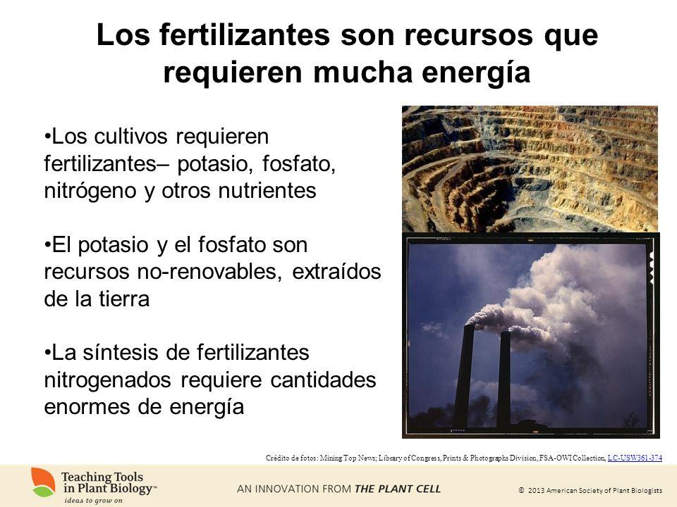 © 2013 American Society of Plant Biologists Los fertilizantes son recursos que requieren mucha energía Los cultivos requieren fertilizantes– potasio,