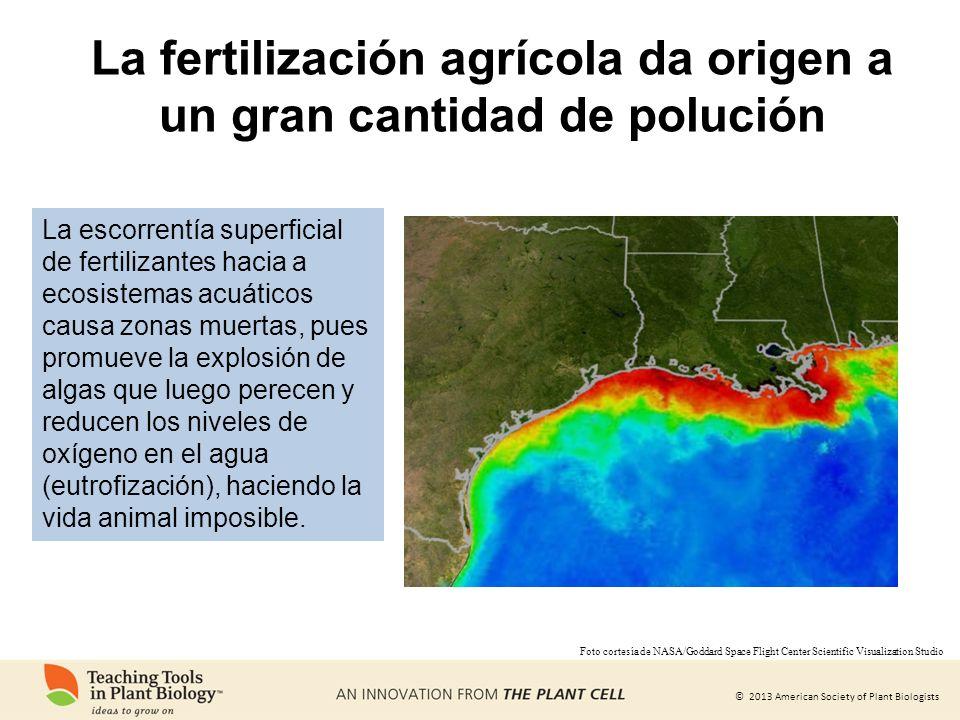 © 2013 American Society of Plant Biologists La fertilización agrícola da origen a un gran cantidad de polución Foto cortesía de NASA/Goddard Space Fli