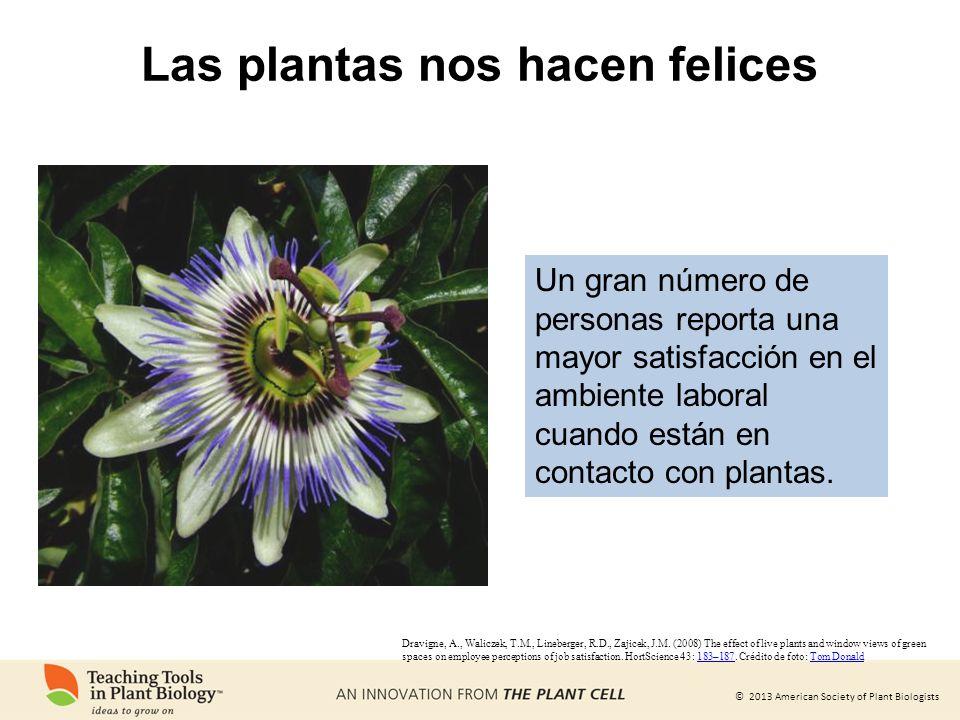 © 2013 American Society of Plant Biologists Las plantas nos hacen felices Dravigne, A., Waliczek, T.M., Lineberger, R.D., Zajicek, J.M. (2008) The eff