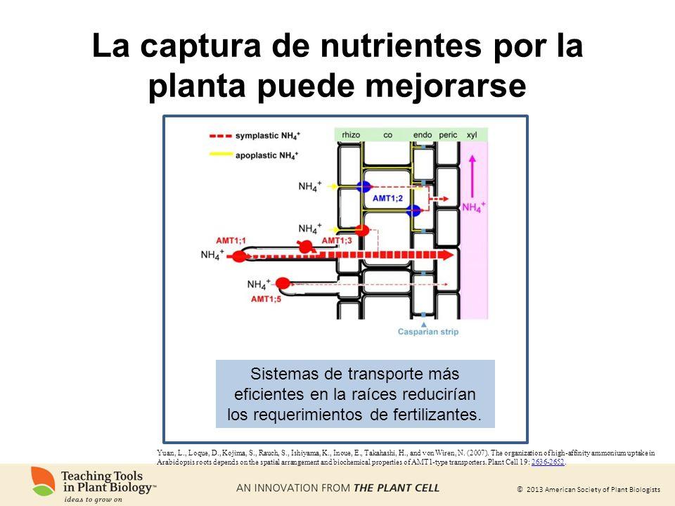 © 2013 American Society of Plant Biologists Yuan, L., Loque, D., Kojima, S., Rauch, S., Ishiyama, K., Inoue, E., Takahashi, H., and von Wiren, N. (200