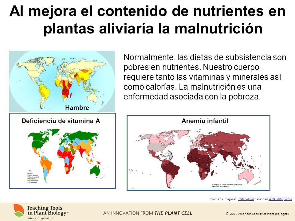© 2013 American Society of Plant Biologists Deficiencia de vitamina A Hambre Normalmente, las dietas de subsistencia son pobres en nutrientes. Nuestro