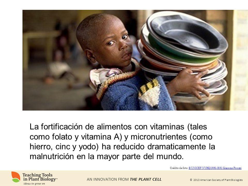 © 2013 American Society of Plant Biologists La fortificación de alimentos con vitaminas (tales como folato y vitamina A) y micronutrientes (como hierr