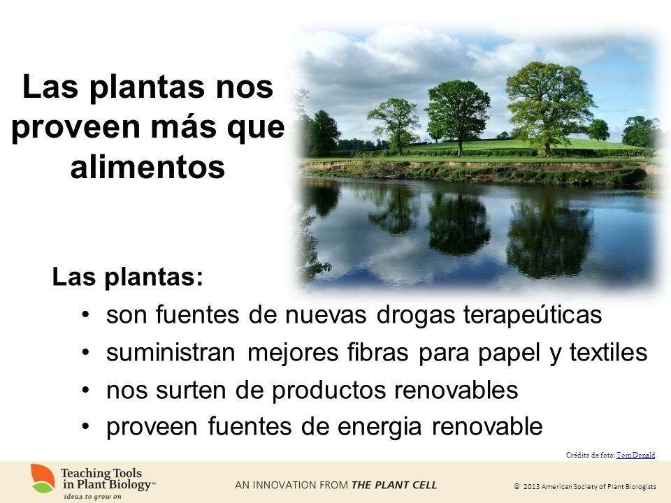 © 2013 American Society of Plant Biologists Las plantas nos proveen más que alimentos Las plantas: son fuentes de nuevas drogas terapeúticas suministr