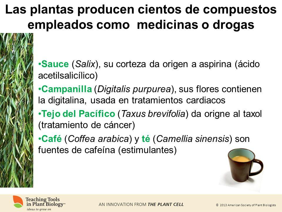© 2013 American Society of Plant Biologists Las plantas producen cientos de compuestos empleados como medicinas o drogas Sauce (Salix), su corteza da