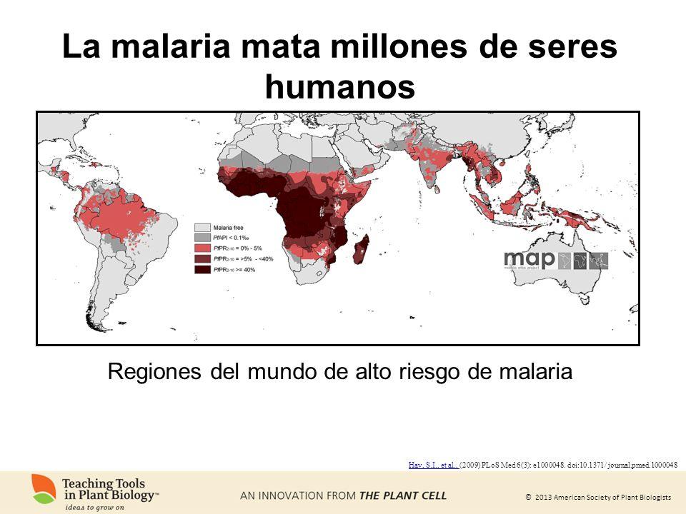 © 2013 American Society of Plant Biologists La malaria mata millones de seres humanos Regiones del mundo de alto riesgo de malaria Hay, S.I., et al.,