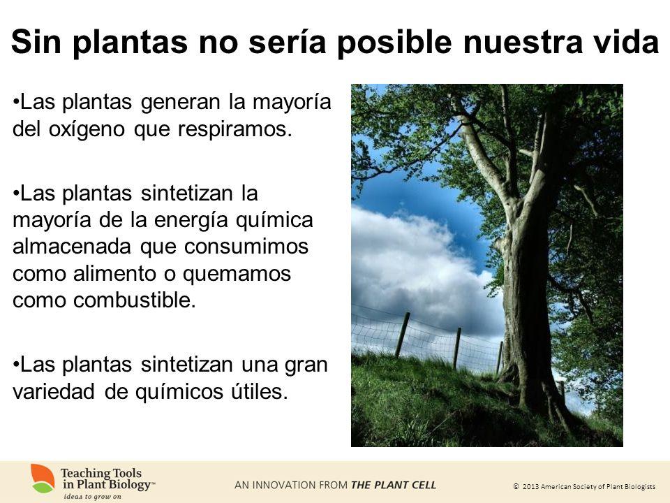 © 2013 American Society of Plant Biologists Sin plantas no sería posible nuestra vida Las plantas generan la mayoría del oxígeno que respiramos. Las p