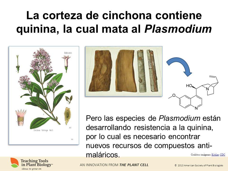 © 2013 American Society of Plant Biologists Pero las especies de Plasmodium están desarrollando resistencia a la quinina, por lo cual es necesario enc