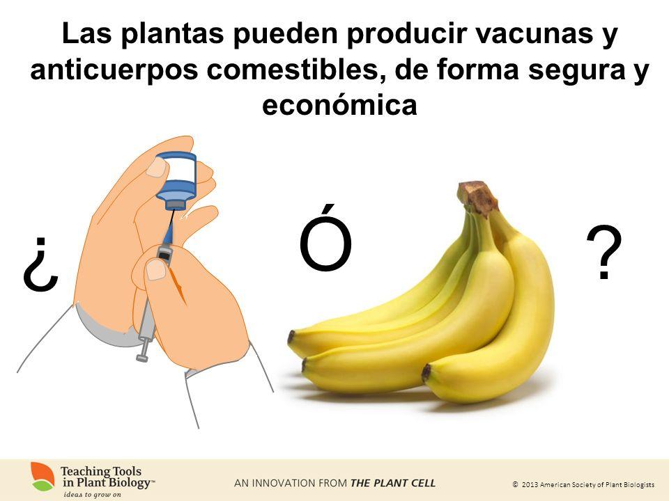 © 2013 American Society of Plant Biologists Ó ? Las plantas pueden producir vacunas y anticuerpos comestibles, de forma segura y económica ¿