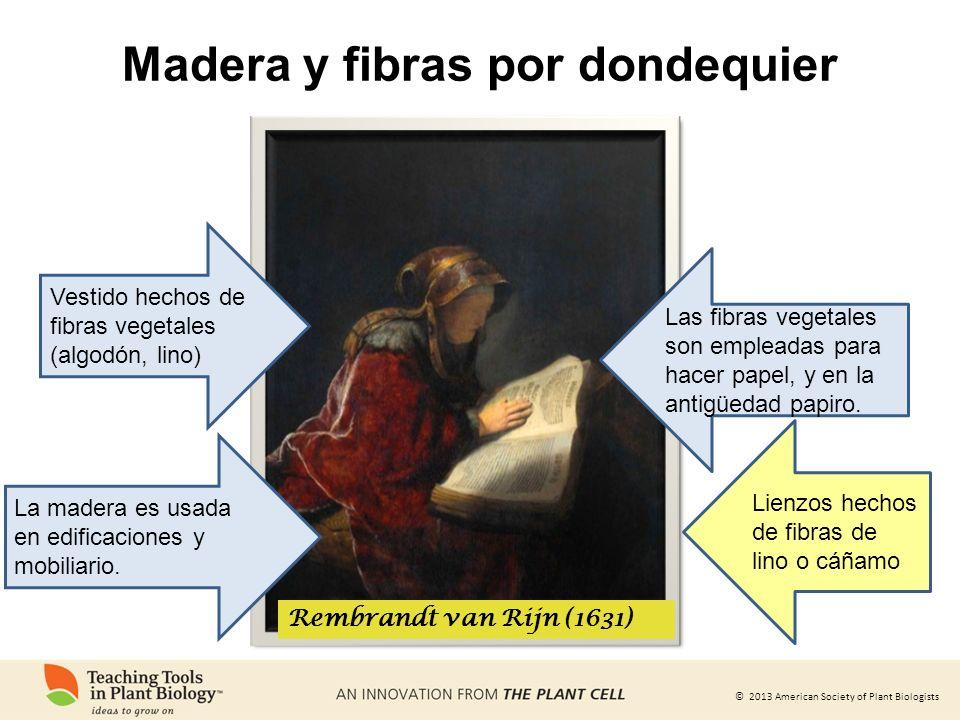© 2013 American Society of Plant Biologists Madera y fibras por dondequier Rembrandt van Rijn (1631) Vestido hechos de fibras vegetales (algodón, lino