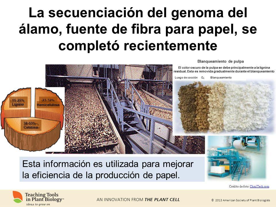 © 2013 American Society of Plant Biologists La secuenciación del genoma del álamo, fuente de fibra para papel, se completó recientemente Esta informac