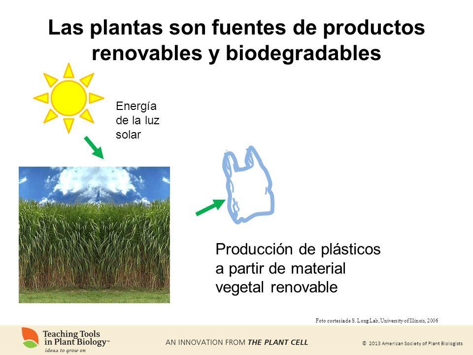 © 2013 American Society of Plant Biologists Las plantas son fuentes de productos renovables y biodegradables Energía de la luz solar Producción de plá