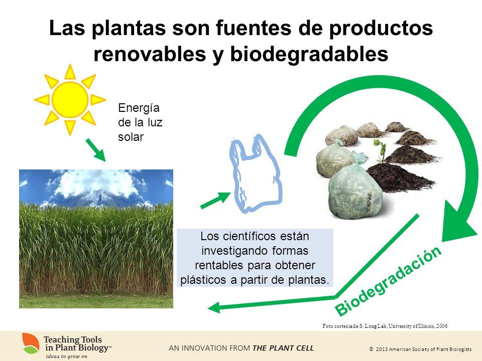 © 2013 American Society of Plant Biologists Energía de la luz solar Biodegradación Los científicos están investigando formas rentables para obtener pl