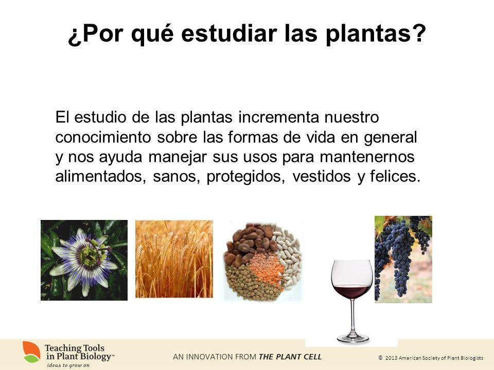 © 2013 American Society of Plant Biologists ¿Por qué estudiar las plantas? El estudio de las plantas incrementa nuestro conocimiento sobre las formas