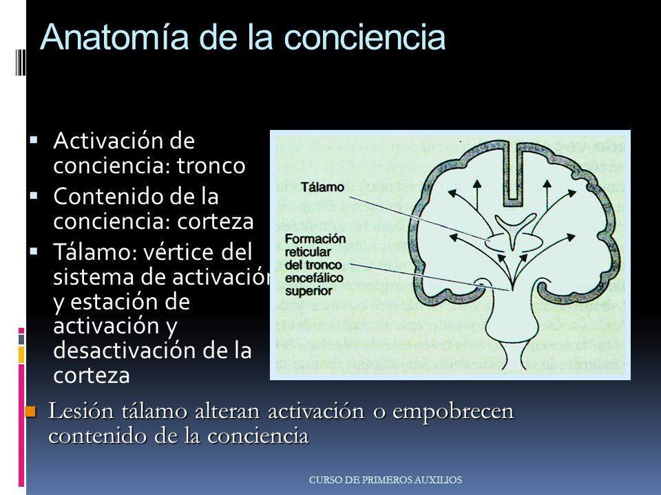 Anatomía de la conciencia Activación de conciencia: tronco Contenido de la conciencia: corteza Tálamo: vértice del sistema de activación y estación de activación y desactivación de la corteza CURSO DE PRIMEROS AUXILIOS Lesión tálamo alteran activación o empobrecen contenido de la conciencia Lesión tálamo alteran activación o empobrecen contenido de la conciencia