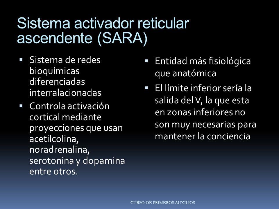 Sistema activador reticular ascendente (SARA) Sistema de redes bioquímicas diferenciadas interralacionadas Controla activación cortical mediante proyecciones que usan acetilcolina, noradrenalina, serotonina y dopamina entre otros.