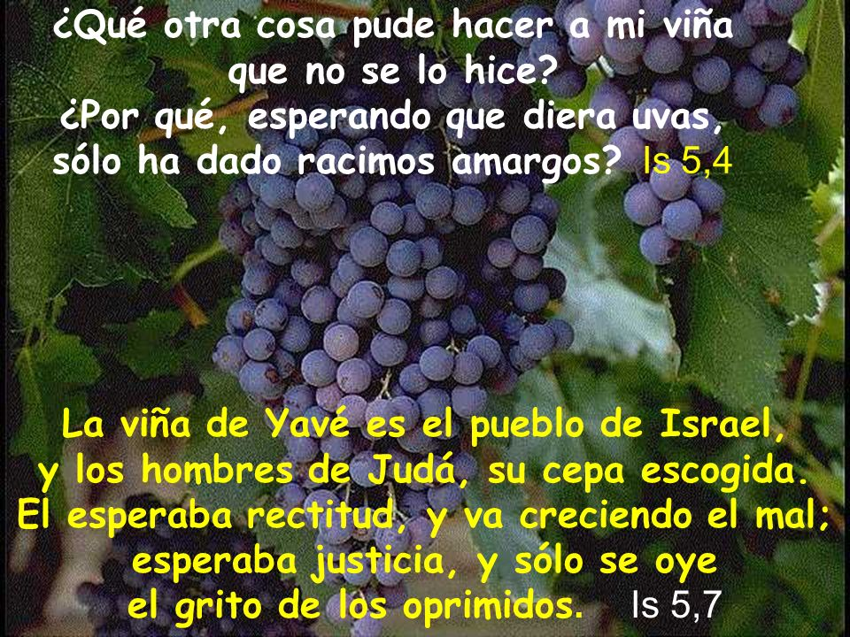 ¿Qué otra cosa pude hacer a mi viña que no se lo hice? ¿Por qué, esperando que diera uvas, sólo ha dado racimos amargos? Is 5,4 La viña de Yavé es el