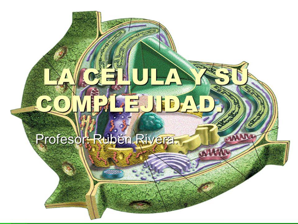 LA CÉLULA Y SU COMPLEJIDAD. LA CÉLULA Y SU COMPLEJIDAD. Profesor: Rubén Rivera.