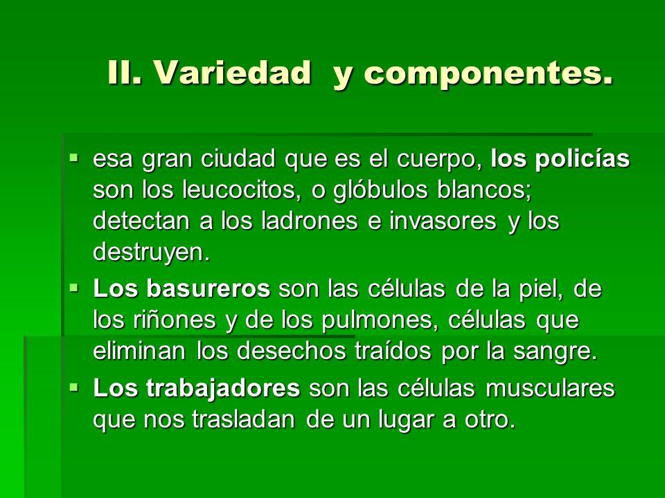 II. Variedad y componentes. esa gran ciudad que es el cuerpo, los policías son los leucocitos, o glóbulos blancos; detectan a los ladrones e invasores
