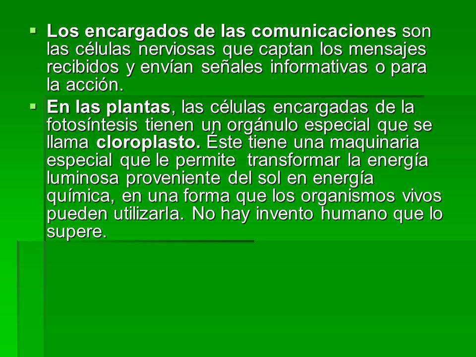Los encargados de las comunicaciones son las células nerviosas que captan los mensajes recibidos y envían señales informativas o para la acción. Los e